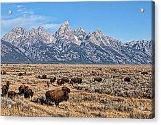 Teton Buffalo Acrylic Print