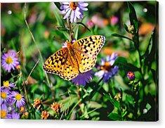 Teton Butterfly Acrylic Print
