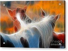 Teton Horses Acrylic Print by Clare VanderVeen