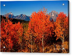 Acrylic Print featuring the photograph Tetons Colors Of Autumn by Aaron Whittemore