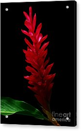 Teuila Acrylic Print by James Temple