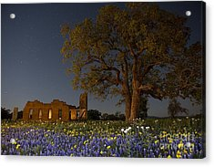 Texas Blue Bonnets At Night Acrylic Print
