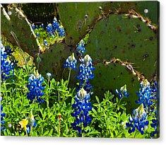 Texas Blue Bonnets Acrylic Print by Mark Weaver