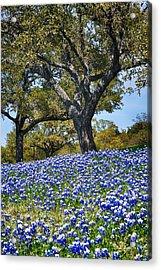 Texas Bluebonnet Hill Acrylic Print