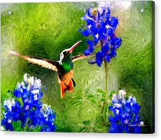 Da161 Texas Bluebonnet Hummingbird By Daniel Adams Acrylic Print