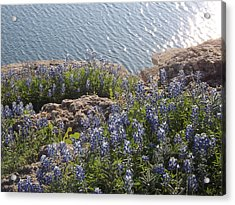 Texas Bluebonnets At Lake Travis Acrylic Print by Rebecca Cearley