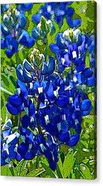Texas Bluebonnets - Posterized Image Acrylic Print