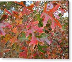 Texas Fall Colors Acrylic Print by Rosalie Klidies