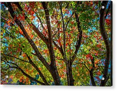 Acrylic Print featuring the photograph Texas Fall Glory by Ross Henton
