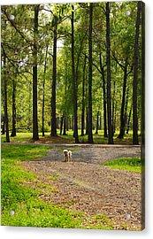 Texas Guard Dog Acrylic Print