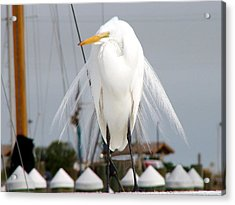 Acrylic Print featuring the photograph Texas Gulf Coast Great White Egret by Linda Cox