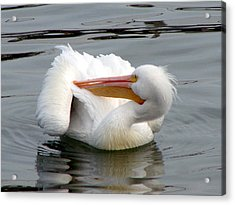 Acrylic Print featuring the photograph Texas Gulf Coast White Pelican by Linda Cox