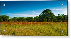 Texas Hill Country Meadow Acrylic Print by Darryl Dalton
