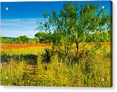 Texas Hill Country Wildflowers Acrylic Print by Darryl Dalton