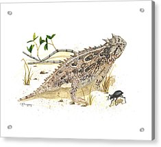 Texas Horned Lizard Acrylic Print