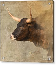 Texas Longhorn # 3 Acrylic Print by Betty LaRue