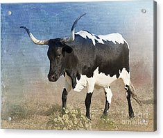 Texas Longhorn #7 Acrylic Print by Betty LaRue