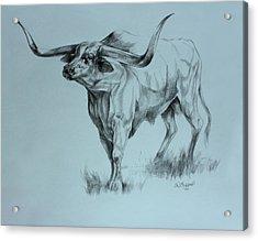Texas Longhorn Acrylic Print by Derrick Higgins