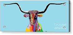 Texas Longhorn Acrylic Print by Eloise Schneider