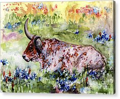 Texas Longhorn In Blue Bonnets Acrylic Print