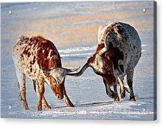 Texas Longhorns Acrylic Print by Lena  Owens OLena Art