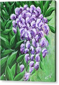 Texas Mountain Laurel Acrylic Print