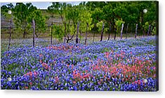 Acrylic Print featuring the photograph Texas Roadside Heaven -bluebonnets Paintbrush Wildflowers Landscape by Jon Holiday