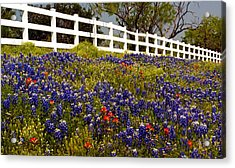 Texas Spring Acrylic Print by Brian Kerls