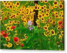 Texas Spring Delight Acrylic Print