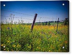 Texas Spring Fling Acrylic Print by Allen Biedrzycki