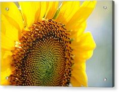 Texas Sunflower Acrylic Print