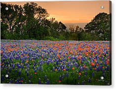 Acrylic Print featuring the photograph Texas Sunset - Bluebonnet Landscape Wildflowers by Jon Holiday