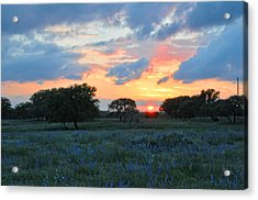 Texas Wildflower Sunset  Acrylic Print