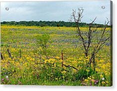 Texas Wildflowers And Mesquite Tree Acrylic Print
