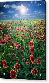 Texas Wildflowers Acrylic Print by Dean Fikar