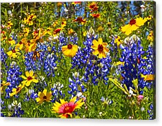 Texas Wildflowers Acrylic Print by John Babis