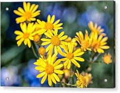 Texas Wildflowers 1 Acrylic Print