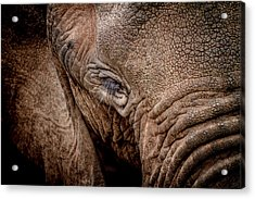 Acrylic Print featuring the photograph Texture Collection by Mike Gaudaur