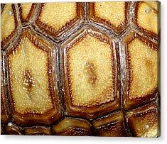 Texture Tortoise Shell Acrylic Print