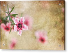 Textured Blossoms Acrylic Print by Terry Ellis