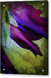 Textured Gladiola Buds Acrylic Print by Shirley Sirois