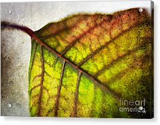 Textured Leaf Abstract Acrylic Print by Scott Pellegrin