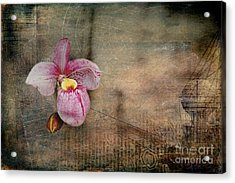 Acrylic Print featuring the photograph Textured Orchid by Vicki DeVico