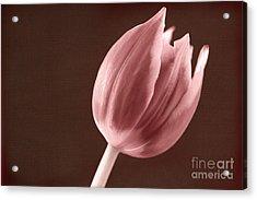 Textured Sepia Tulip Acrylic Print
