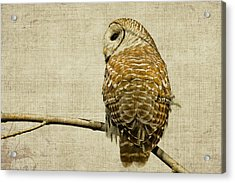 Textured Strix Varia Acrylic Print by Michel Soucy