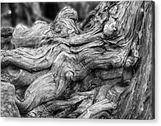 Textures Of Nature Black And White Acrylic Print by Jack Zulli