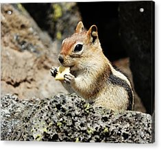 Thank You For The Cracker Acrylic Print by VLee Watson