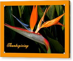 Thanksgiving Card Bird Of Paradise Acrylic Print