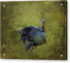Thanksgiving Is Coming Better Run Better Run Acrylic Print