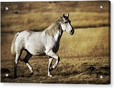 Acrylic Print featuring the photograph That Golden Hour D3550 by Wes and Dotty Weber